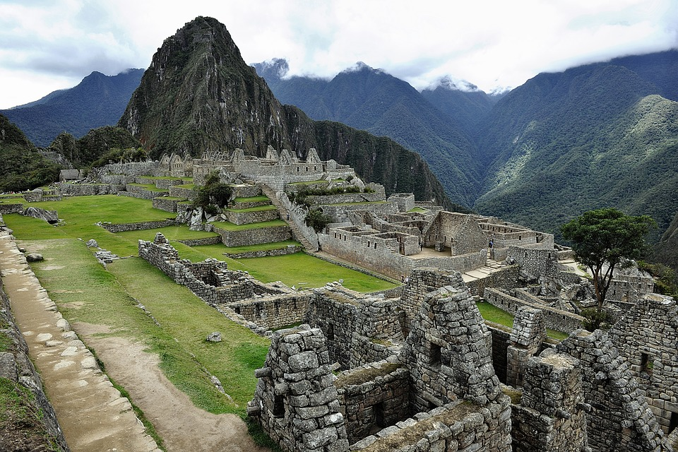incas kruid